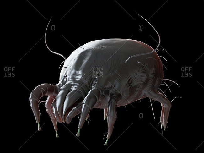 Illustration of a dust mite.