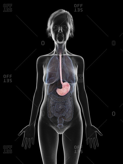 Illustration of an old woman's stomach.