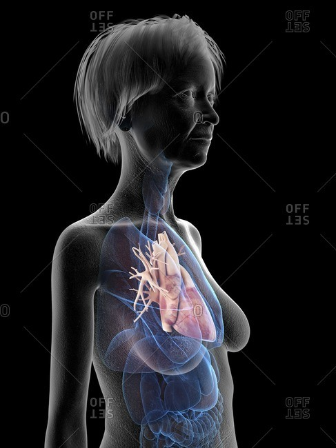 Illustration of an old woman's heart.
