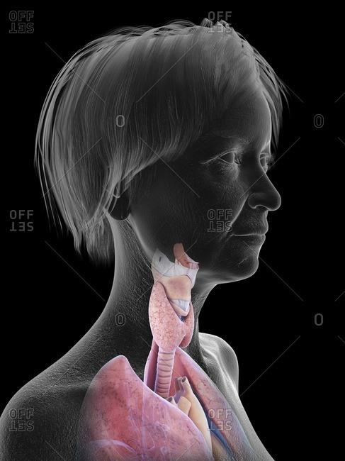 Throat Stock Photos Offset