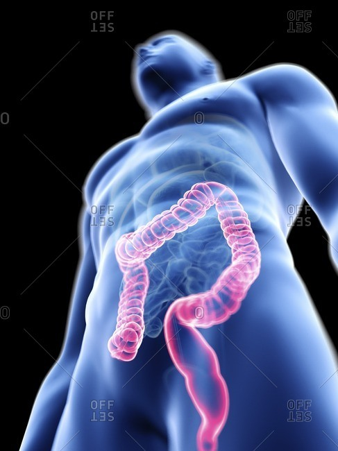 Illustration of a man's colon.