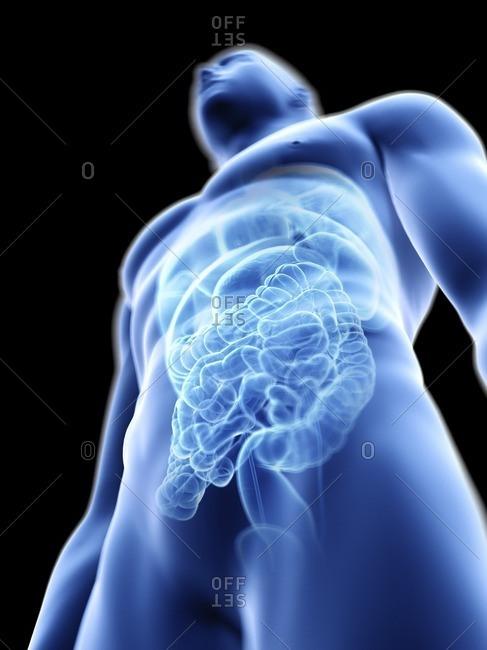 Illustration of a man's internal organs.