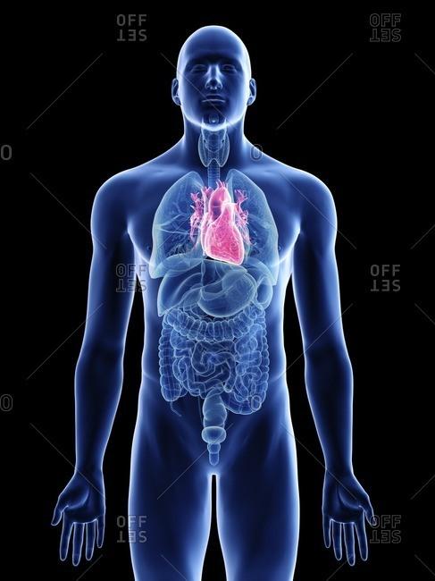Illustration of a man's heart.