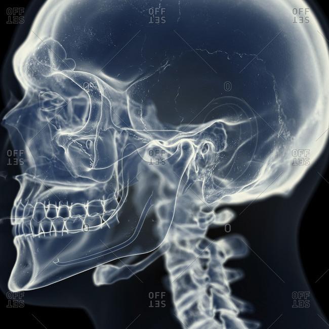 Illustration of the temporomandibular joint.