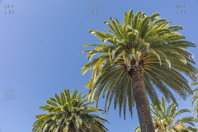 Palm trees contrast with the bright blue California sky