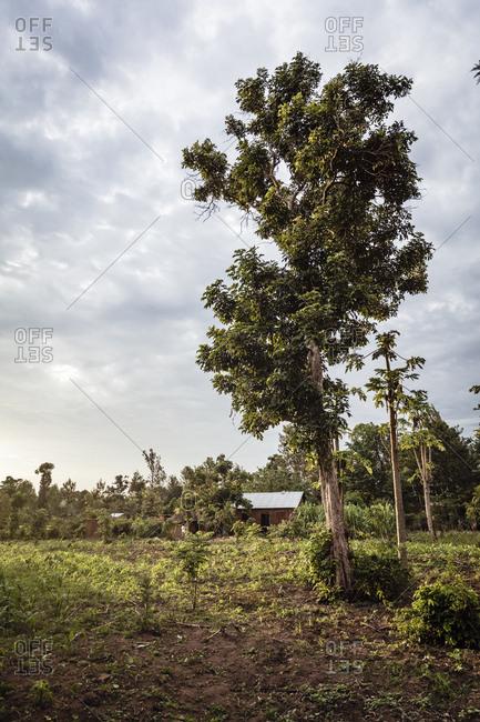 A rural farm in Eastern Uganda
