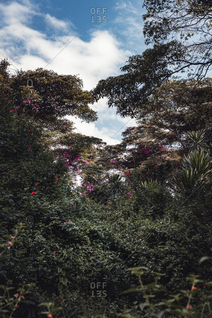 A lush tropical forest in Nairobi, Kenya