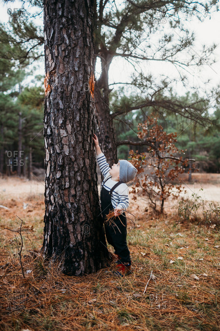 Young boy in the forest reaching up and touching a tree