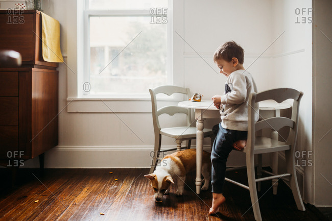 Dog eating crumbs from boy dropping his snack on the floor