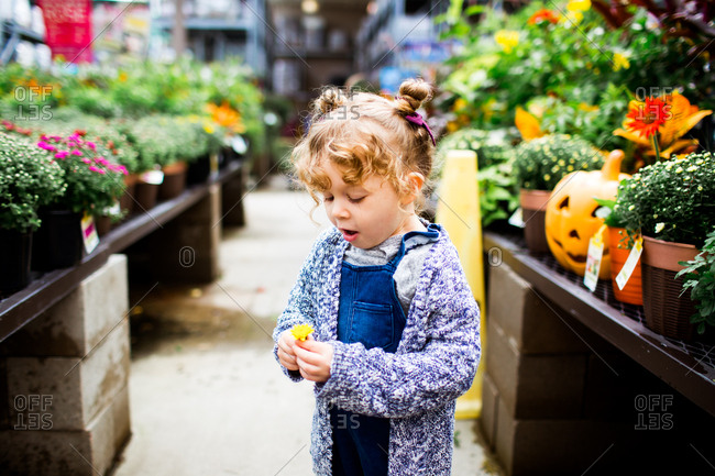 Little girl looking at a picked flower in a garden center