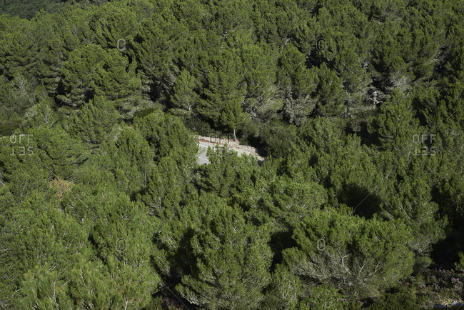 Hidden road in the middle of forest. Aerial view.
