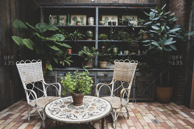 Garden room with vintage wicker chairs and table and a selection of indoor plants in terracotta pots on wooden shelves.