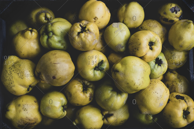 High angle close up of a crate of fresh quinces fruits.