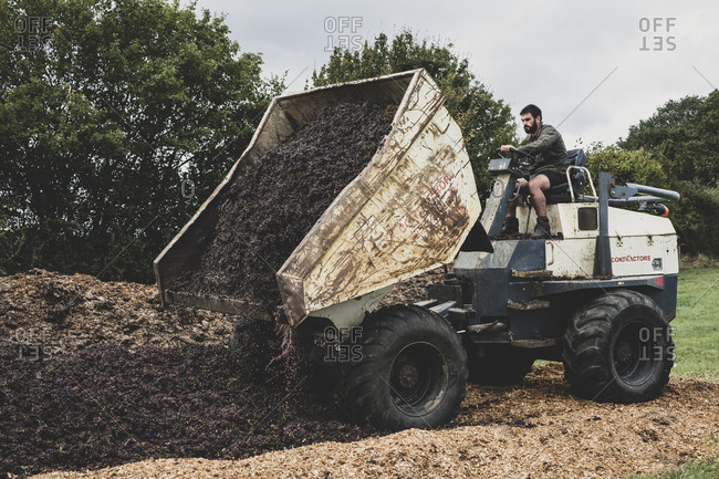 Man on a tractor unloading load of manure on a vineyard.