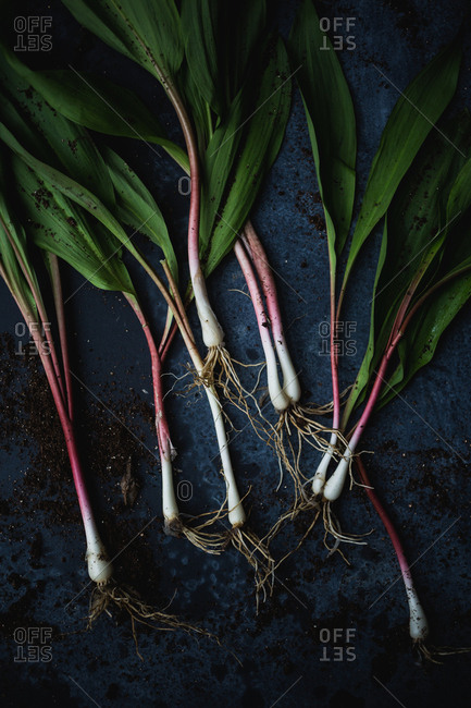 Spring onions ramps on dark background