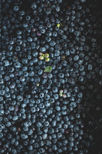 Blueberries being cleaned in water