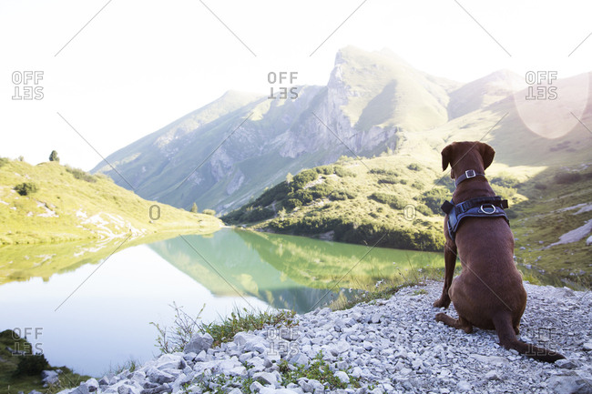 Austria- South Tyrol- dog sitting on viewing point