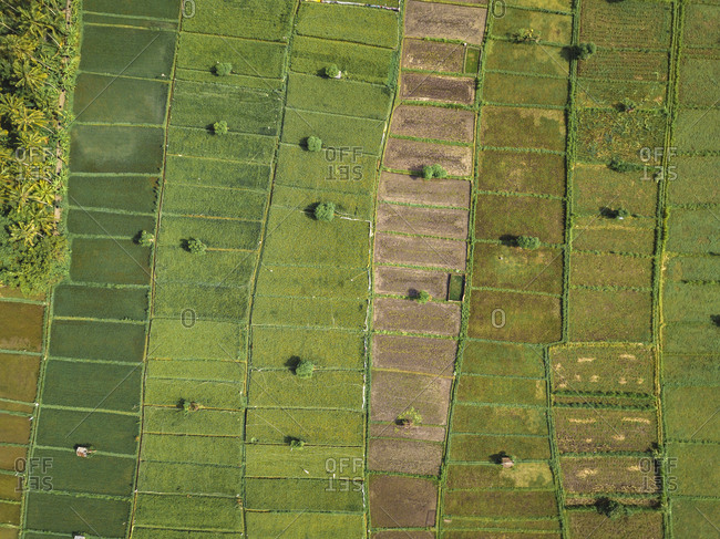Indonesia- Bali- Candidasa- Aerial view of rice fields