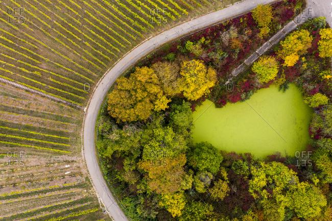 Germany- Baden-Wuerttemberg- Aerial view of Korber Kopf- vineyards in autumn