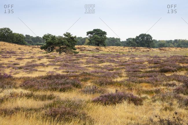 Germany- North Rhine-Westphalia- Muensterland- Westruper Heide- Hohe Mark Nature Park