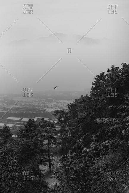 View from a scenic viewpoint of a town and forested hillside