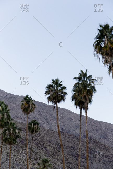 Palm trees and mountains in Palm Springs, California.