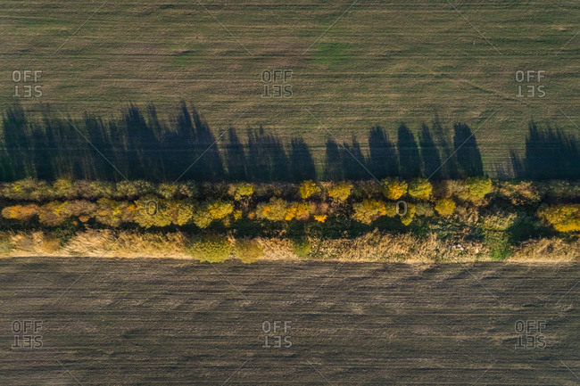 Aerial view of a forest line dividing agricultural fields, Estonia.