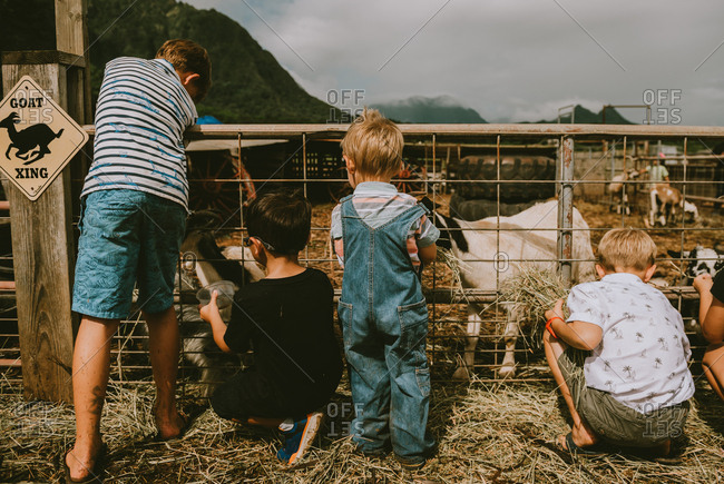 Group of young boys feeding animals at a farm