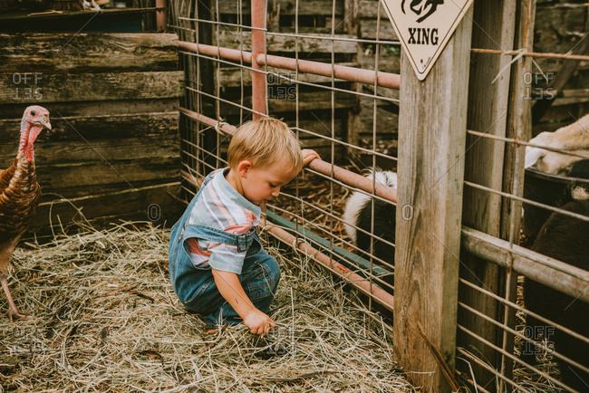 Young boy feeding animals on a farm