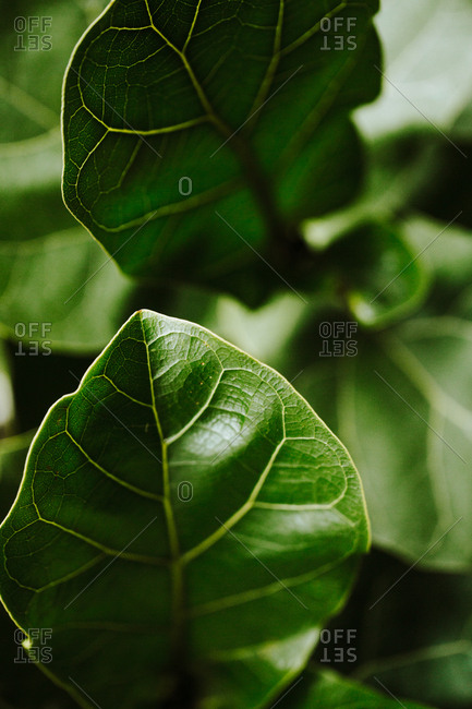 Close up of green plant leaves