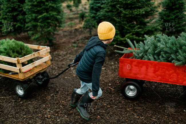 Boy pulling wagon with Christmas tree on a tree farm