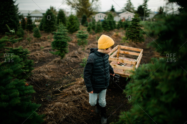 Young boy pulling wagon with Christmas tree on a tree farm