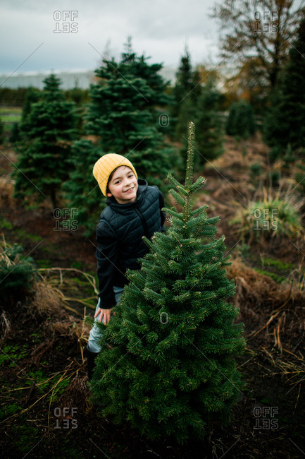Boy picking out a Christmas tree on a tree farm