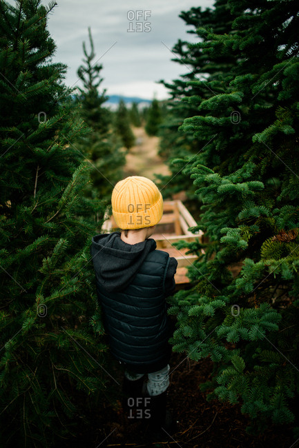 Rear view of boy pulling wagon with Christmas tree on a tree farm