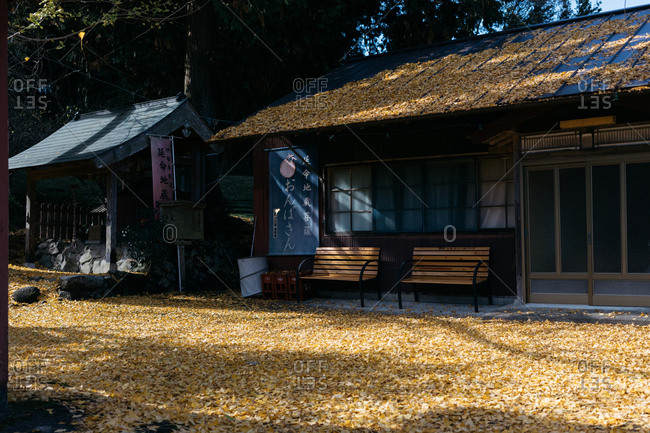 Japan - November 15, 2018: Autumn leaves surrounding traditional Japanese buildings