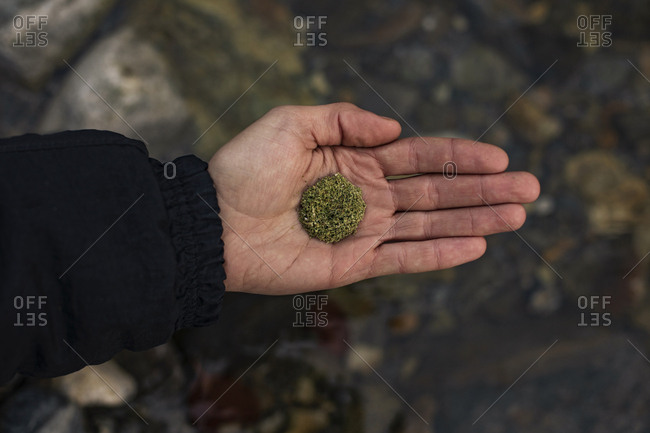 Close up of the hands of a man with marijuana