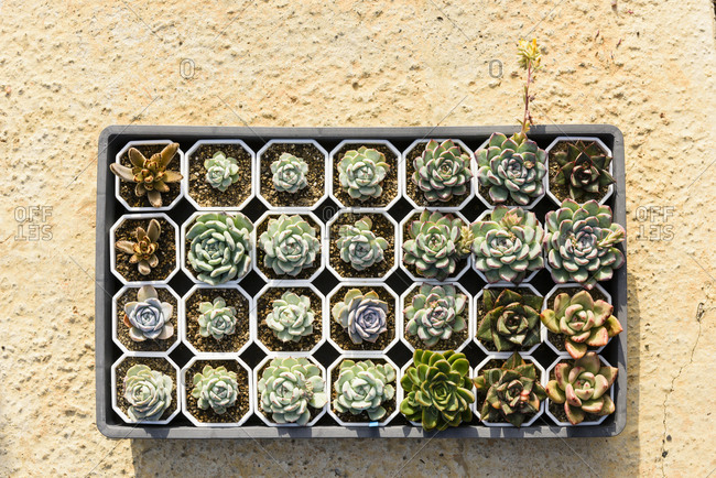 Various colorful succulent plants on rough ground under sunshine