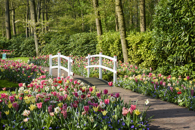Lovely trail full with blooming  colorful tulips and small bridge in beautiful spring garden