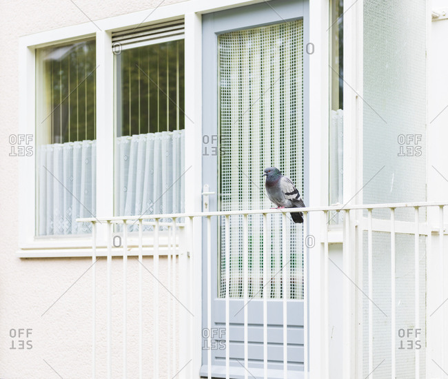 Pigeon stands on railing in front of white door, window and wall.