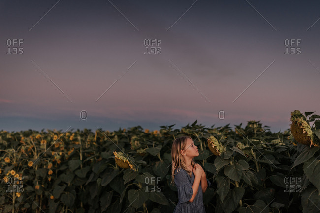 Little girl looking at sunflowers at sunset