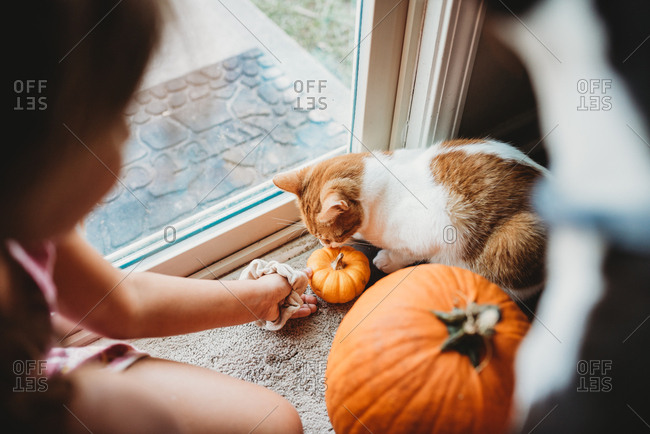 Little girl playing with pumpkins and cat