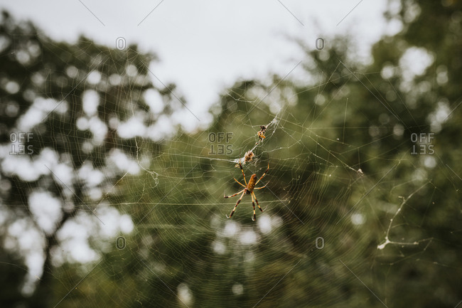 Bugs eye view of spider and prey in a web