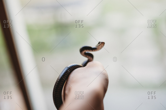 Person holding a small black garden snake