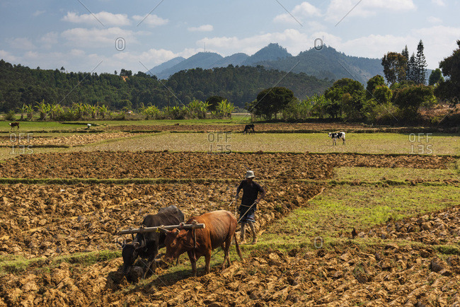 October 5, 2018: Rice paddy field worker farming near Andasibe, Madagascar, Africa