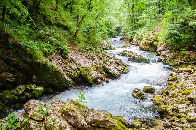 Radovna River flowing through Vintgar Gorge, near Bled, Slovenia, Europe