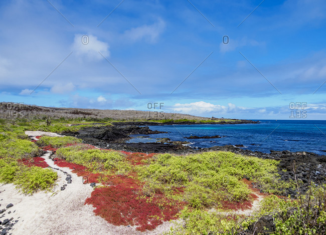 Landscape of the coast near Puerto Velazco Ibarra, Floreana (Charles) Island, Galapagos, UNESCO World Heritage Site, Ecuador, South America