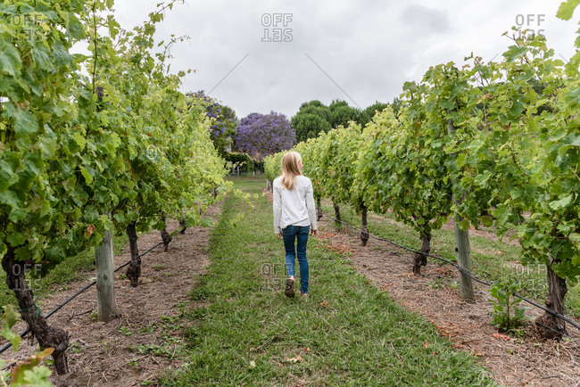 Blonde girl walking in a vineyard