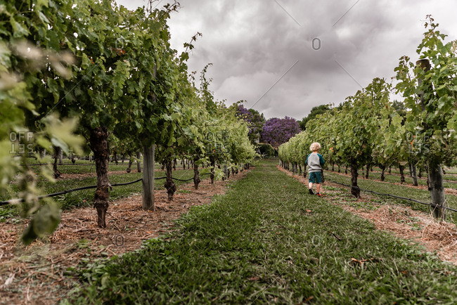 Young blonde boy in a vineyard