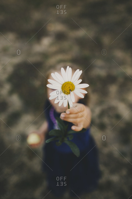 Little girl holding daisy up to camera