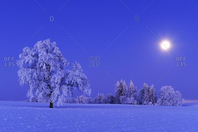 Winter landscape with white frost by the light of a full moon, Horben, Aargau, Switzerland, Europe